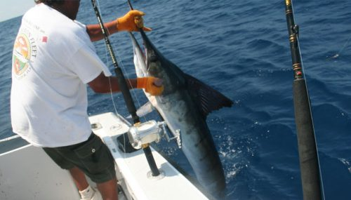 Five Tips To Catching Marlin